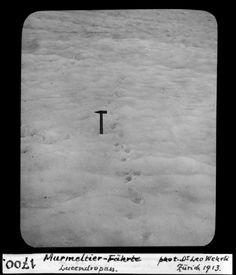 Murmeltier-Fährte, Lucendropass. Dia_247-01700