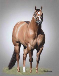 Stallions horses aqha
