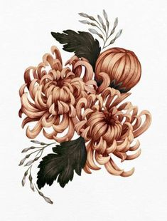 It's Floral Friday! Here are some pumpkin-y chrysanthemums…really just wishing for ANY season that isn't winter right now. Botanical Tattoo, Botanical Drawings, Botanical Flowers, Botanical Prints, Flor Tattoo, Botanisches Tattoo, Flower Images, Flower Art, Underwater Flowers