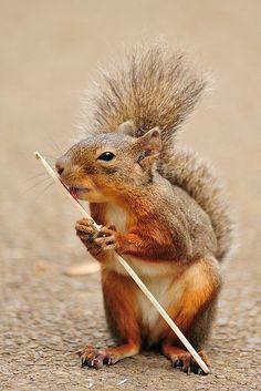 Popsicle stick!