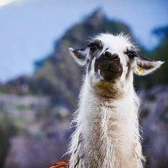 Peru Hop (@peruhop) • Instagram-fényképek és -videók
