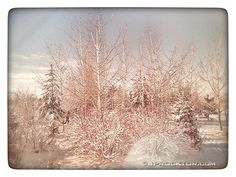 Alberta Prairie Winter by JProcktorPhotography on Etsy Winter, Etsy, Outdoor, Winter Time, Outdoors, Outdoor Games, Outdoor Living, Winter Fashion