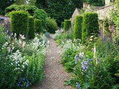 Jinny Blom's design of a Cotswold garden: roses, clematis, topiarised yew, alliums, violas and Verbena bonariensis.