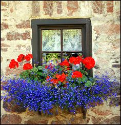 "From Birds & Blooms reader Jane Bullard Horn: ""Red geraniums with blue Lobelia flowing all around,beautiful together."" (Photo by Goby 1 via Flickr)"