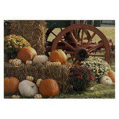 A pumpkin display at Wears Valley Fall Festival. Pumpkin Display, Autumn Display, Fall Displays, Store Displays, Fall Home Decor, Autumn Home, Autumn Fall, Fall Festival Decorations, Planting Pumpkins