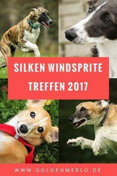 Silken Windsprite Cl