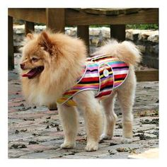 DIY Pets Crafts : DIY Japanese Fruits Rainbow Dog Coat