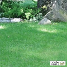 Go 'green' with the 'No Mow Lawn Grass Seed mix. This ecologically sensible lawn will save you time, water, fuel and money while enjoying a deep green, thick carpet of low growing, fine textured turf.