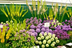 The Chelsea Flower Show 2013, May 21-25, London