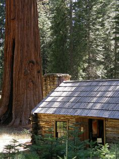 Galen Clark Museum in the Mariposa Grove of Giant Sequoias, Yosemite National Park, California, USA