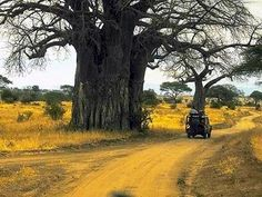 Caprivi Game Park, Afrika - wow, if this tree could talk - must be of years old Places Ive Been, Places To Go, Land Of The Brave, Reality Of Life, Nature Tree, Tree Forest, African Safari, Forests, Followers