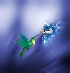 / Blue Mind Fulness by Josep Sumalla i Jordana Hummingbird Tattoo Watercolor, Hummingbird Wallpaper, Hummingbird Painting, Images Colibri, Art Colibri, Pretty Birds, Beautiful Birds, Hummingbird Pictures, Good Morning Beautiful Images