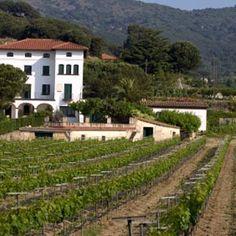 Penedes wine region in Catalonia.