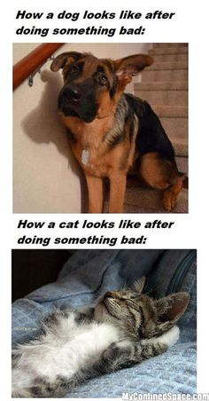 dogs vs cats after