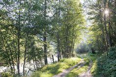 Der Vier-Quellen-Weg im Gotthardmassiv, Rhein, Reuss, Ticino, Rhone Country Roads, Plants, Paintings, Plant, Planets
