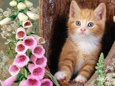 cool flowers cats animals kittens foxgloves hd pictures wallpaper Check more at http://www.finewallpapers.eu/pin/4319/