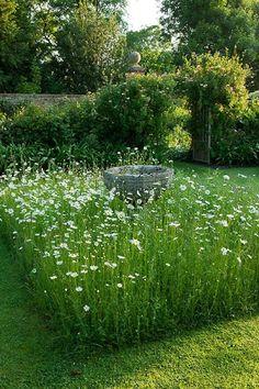 Wildflower garden around a bird bath