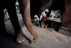 Steve McCurry, INDIA. 1996. An elephant walks past a vendor.                                                                                                                                                                                 More