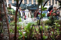 """Landscape design students Kati Jukarainen and Mervi Kokkila designed a """"wonder garden"""" to Helsinki Central Railway Station.  Ihmepuutarha avattiin Helsingin rautatieasemalle. Ihmepuutarhan ovat suunnitelleet Kati Jukarainen ja Mervi Kokkila Hämeen ammattikorkeakoulusta."""