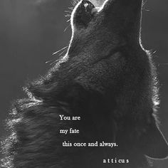 And when one wolf  finds its mate, they are mates for life. That is our fate ❤️