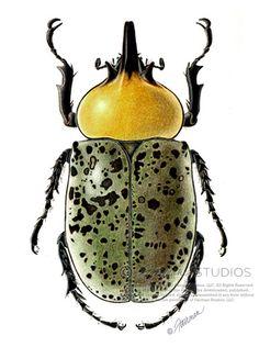scarab beetle - Pesquisa Google