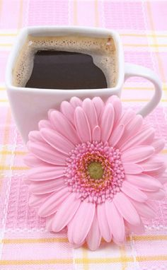☜♥☞ café - Coffee and a pink flower Good Morning Messages, Good Morning Greetings, Good Morning Wishes, Good Morning Images, Morning Quotes, Morning Memes, Morning Pictures, Good Morning Coffee, Good Morning Good Night