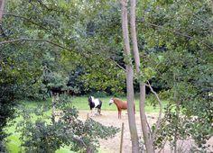 Het uitzicht vanuit Villa Rosa op het Lergerbos bij Lies op Terschelling.