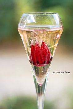 cocktail fleurs hibiscus champagne