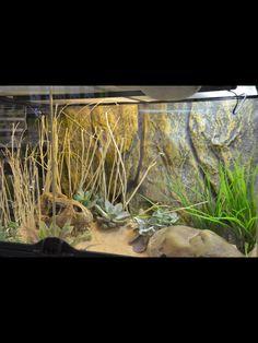 54 Best Desert Vivarium Inspiration Images Reptile Cage Reptiles