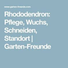Rhododendron: Pflege, Wuchs, Schneiden, Standort   Garten-Freunde