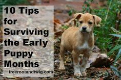 10 Tips for Surviving the Early Puppy Months. Even more great ideas in the comments!