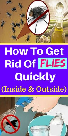 How To Get Rid Of Flies Quickly (Inside & Outside) – Mag For Health - Health Remedies