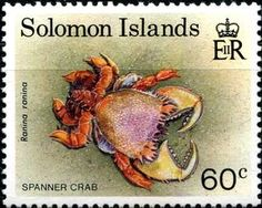 Spanner Crab (Ranina ranina)