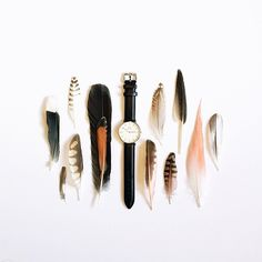 Neatly ordered objects: Feathers and watch by Ja Soon Kim