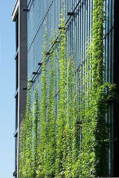 A green facade is a type of vertical garden installed on a building wall, designed to beautify, cool and shade the building. In some cases, a facade may not have a support structure since the plants are able to attach directly to the wall's surface. Green Architecture, Sustainable Architecture, Sustainable Design, Architecture Details, Landscape Architecture, Landscape Design, Residential Architecture, Contemporary Architecture, Vertical Green Wall