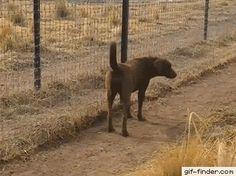 A lion greets a dog like a gentleman