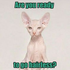 Go hairless with Laser Hair Removal!   www.creativeimagelasersolutions.com