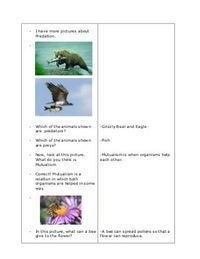 A Detailed Lesson Plan in Science in Grade IV I. enumerate the five ecological relationshi… Science Lesson Plans, Kindergarten Lesson Plans, Science Lessons, Lesson Plan Examples, Lesson Plan Format, Teaching 5th Grade, 5th Grade Reading, Female Urinal, Outdoor Survival