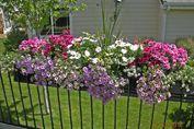 Balcony flower box image of deck railing flower boxes balcony flower boxes uk Railing Flower Boxes, Balcony Flower Box, Flower Planters, Flower Pots, Flower Ideas, Garden Planters, Deck Railing Planters, Deck Railings, Porch Planter