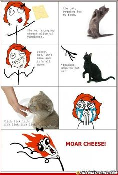 Must Feed The Cute Cat!