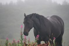 A Kodiak wild horse, stopping to smell the flowers. Photo by: Becky Church