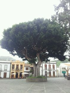 Teror.GRAN CANARIA. Canario, Canary Islands, Places Ive Been, Holidays, Country, World, House Styles, Travel, Outdoor