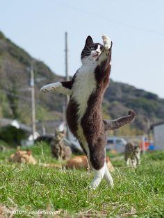 """久方 広之 新作「のら猫拳キッズ」さんのツイート: """"良いか弟子たちよ・・・よく見ておくのだ・・・ 敵が! こう来たら!こう! こう来たらこう!やって倒すのだ~~~~~!!!… """""""