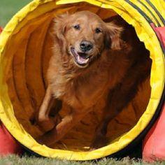 Cute Doggie!!!