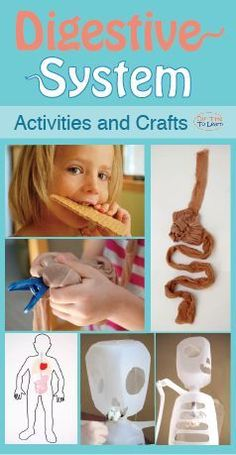 Lots of activity ideas for your lesson plan on the digestive system! From the Our Time to Learn blog and workbook, for ages 4-6, preschool, kindergarten, 1st grade, and home school.