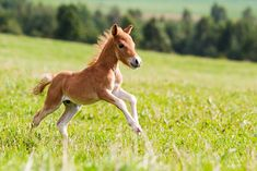 All you need to know about horses: breeding, domestication and feedstuffs
