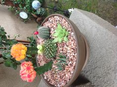 Cacti garden #2