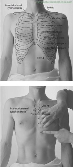 Rib cage location on human body external view - www.anatomynote.com
