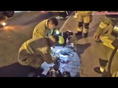 Firefighters give mouth-to-mouth to revive a CAT after rescuing it from ...