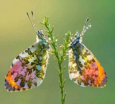 Butterfly magic by Peter Sabol Sharpeye Photography via Avant Gardens FB page.